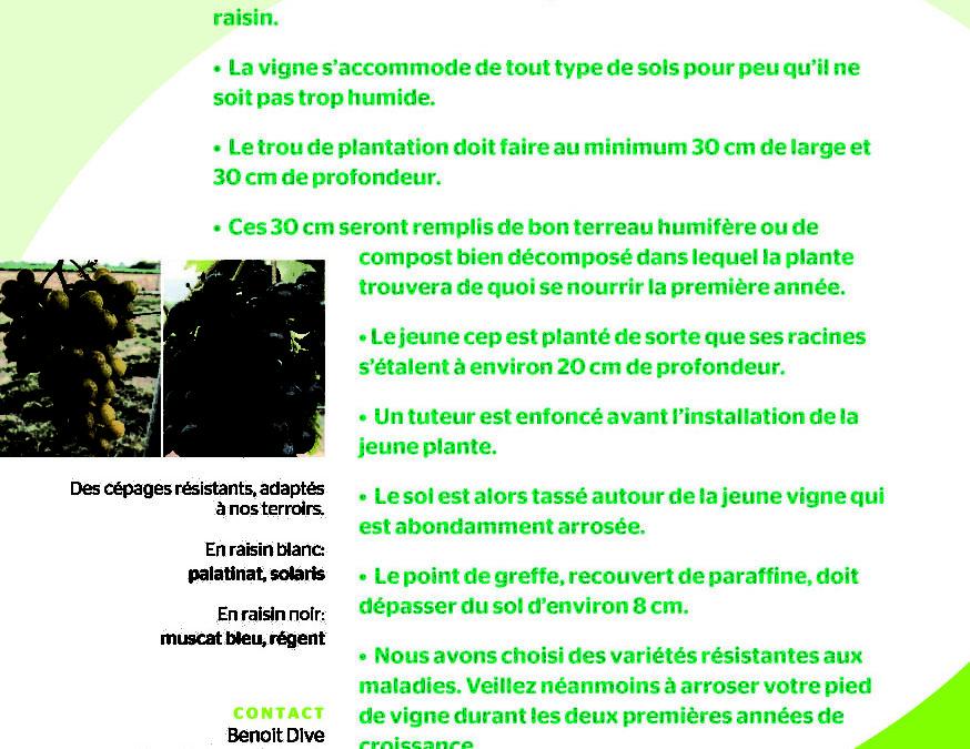 Conseil pour la plantation des  pieds de vigne